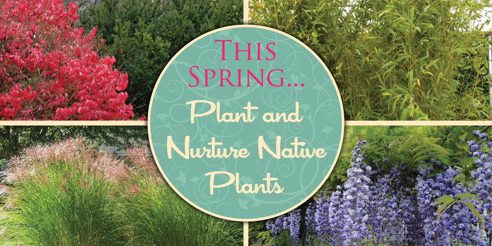 This Spring... Plant and Nurture Native Plants