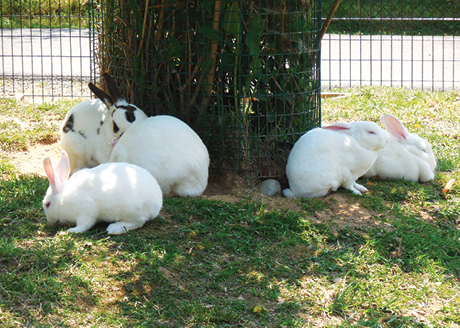 roers_rabbits